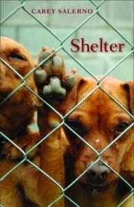 Shelter (alice james books, 2009)